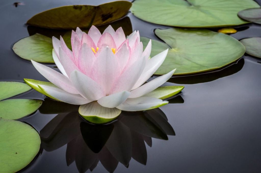 The Tricky Lily Pad Riddle (You Probably Can't Solve)