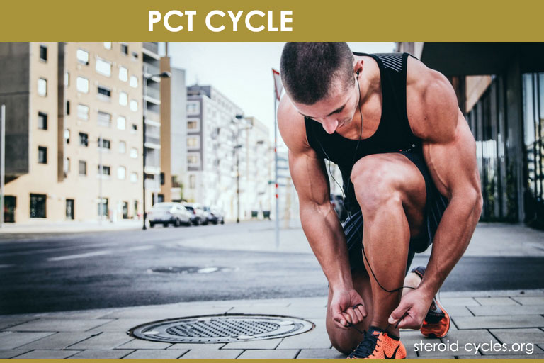 PCT Cycle: Post Cycle Therapy Supplements Works & Results Revealed [2019]