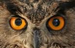occhi-di-gufo4
