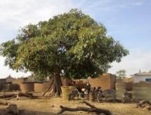 villaggio-africano-con-vitellaria-paradoxa