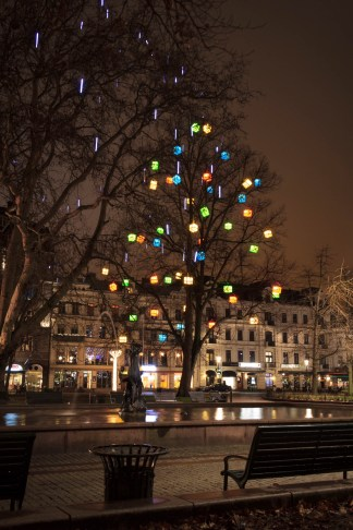 Christmas Trees lit up with presents at Gustav Adolf torg outside of our hotel, Malmo, Sweden