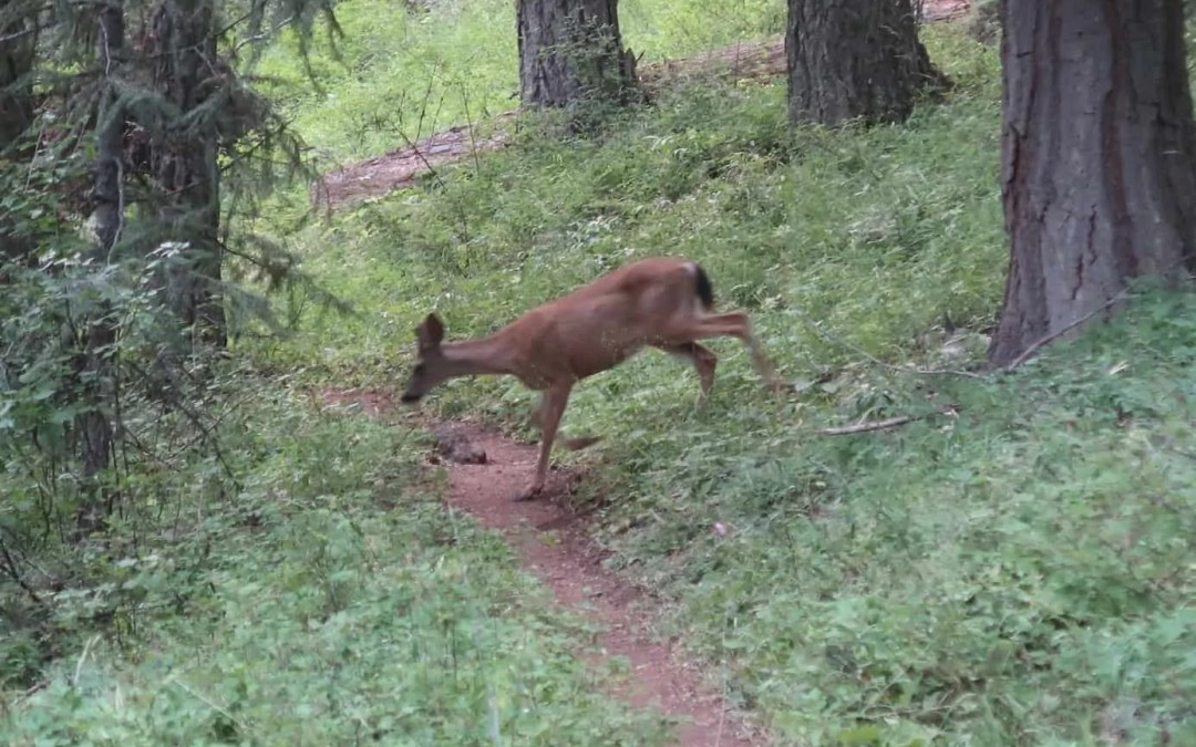 PCT: Day 123: The deer