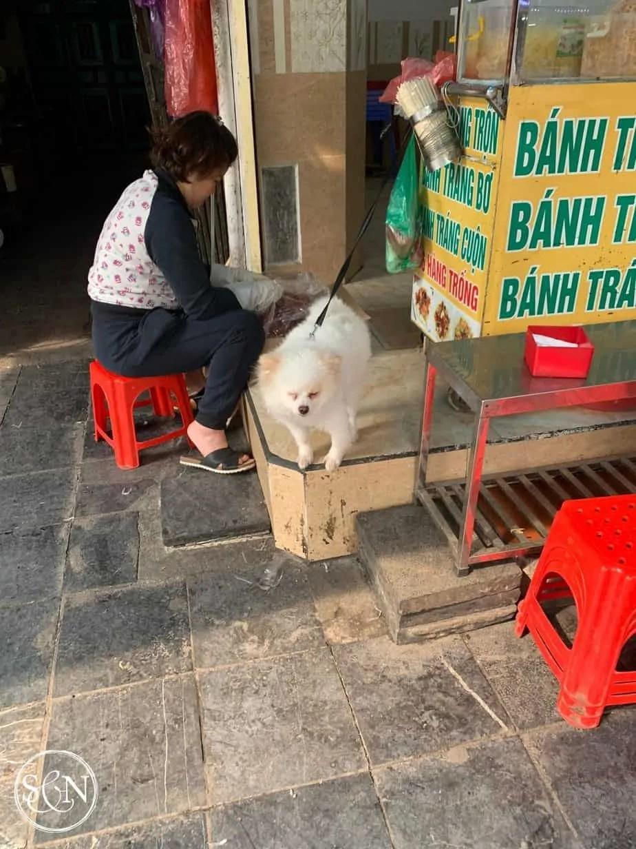 City dogs