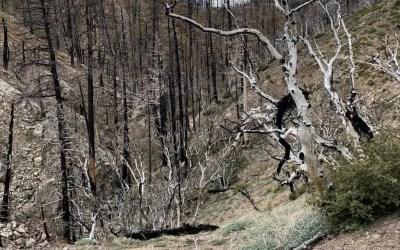 PCT: Mission Creek to Big Bear