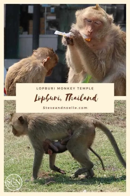 Lopburi Monkey Temple is a must visit from Bangkok!