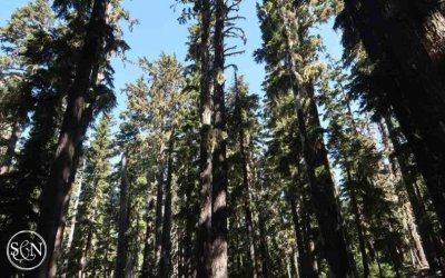 PCT: Day 130