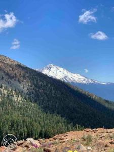 Mt Shasta from the PCT