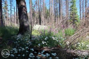 Flowers of the PCT