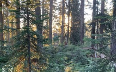 PCT: Day 155