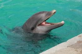 Darwin the dolphin