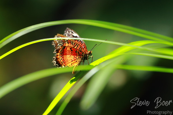Butterfly at Devonian Gardens
