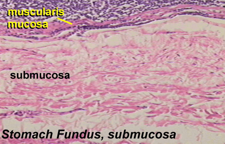 Structure Appendages Skin