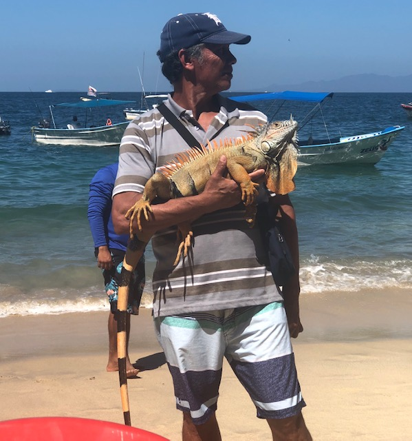 A guy walking around with a big iguana - probably 3.5 feet nose to end of tail.