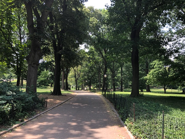Long wide sidewalk lined with trees and lawns