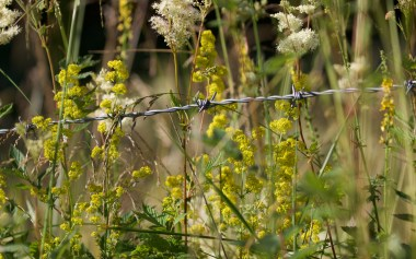 Lady's bedstraw and meadowsweet