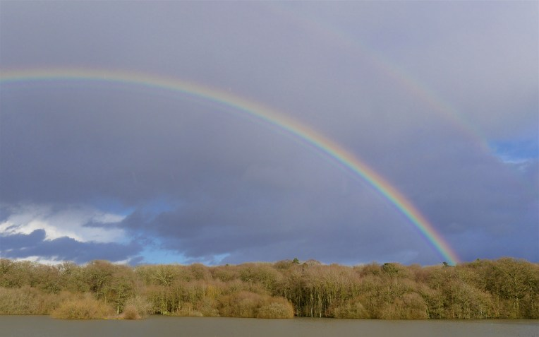 March rainbow over the heronry wood