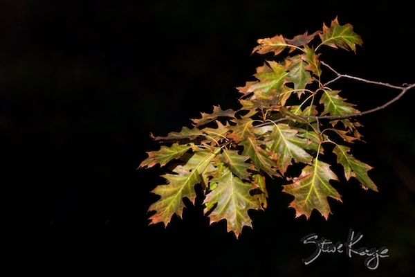 Autumn Leaves, (c) Photo by Steve Kaye, in Publications / Articles