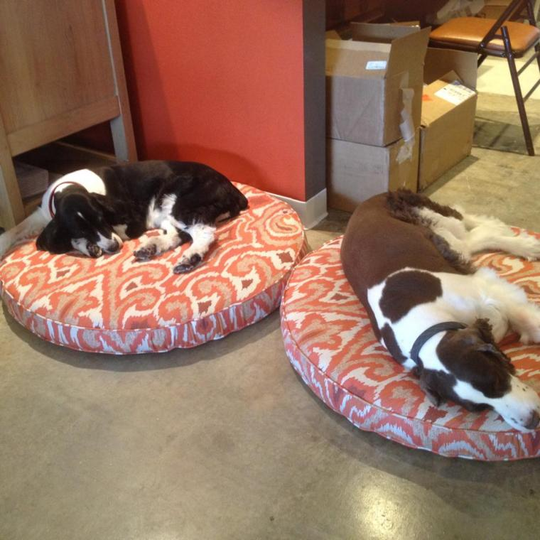 The pups lounging on their fabulous new beds (thanks Laurie Bell!) at the store.
