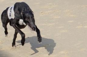 WIMBLEDON DOG TRIALS-37