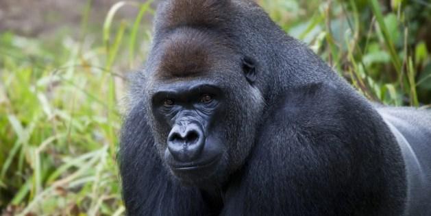 Dynamics 365 – Backward Walking Gorilla