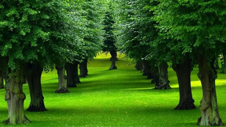 Trees Leaves e1472670461578