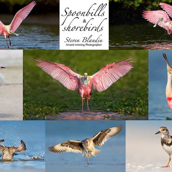 Bird photography workshop - Florida Spoonbills & Shorebirds