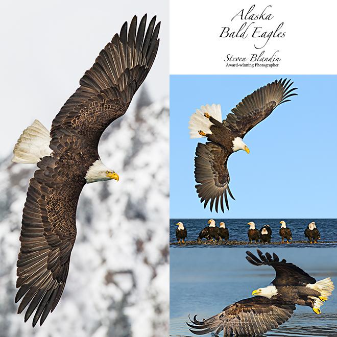Alaska Bald Eagles photography tour