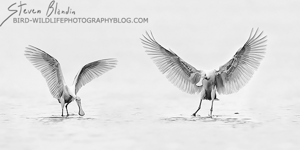 BBC Wildlife Photographer Of The Year final round - Wings Up Style