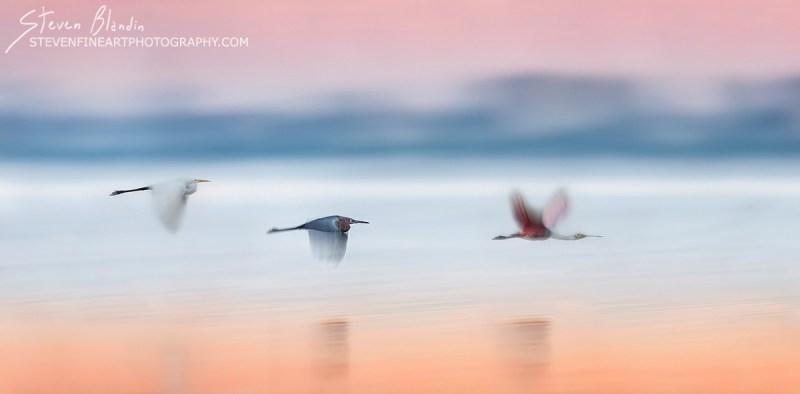 Fine Art Bird Photography_Florida Birds