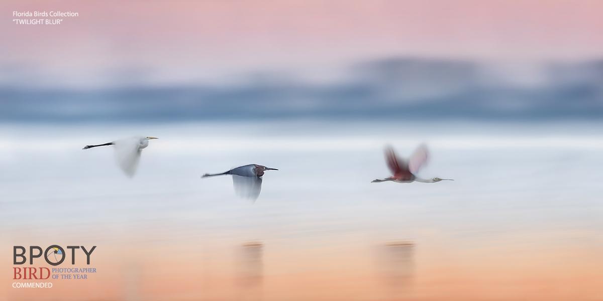 Twilight Blur - Bird Photography Tours