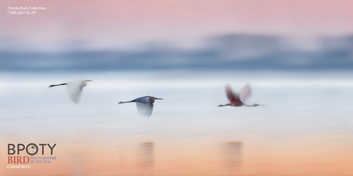 Twilight Blur - Bird Photography Tours