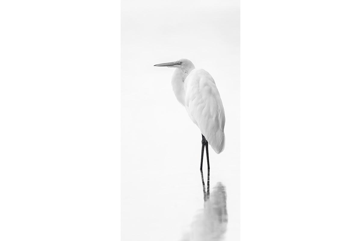 Black and White_Fine Art_White On White
