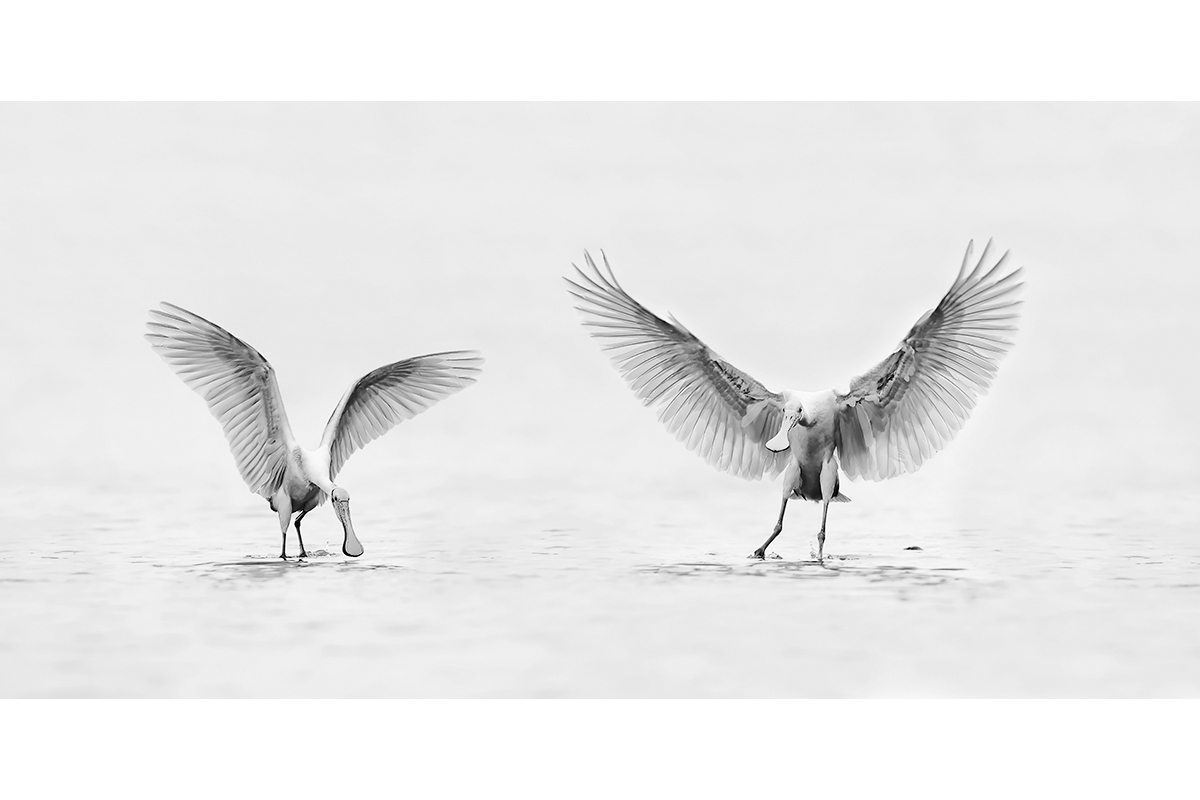Black and White_Fine Art_Wings Up