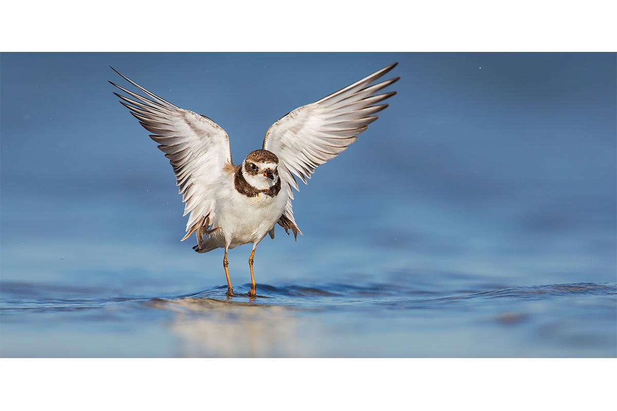 Fine Art Florida Birds_Tiny Flap Over The Ocean
