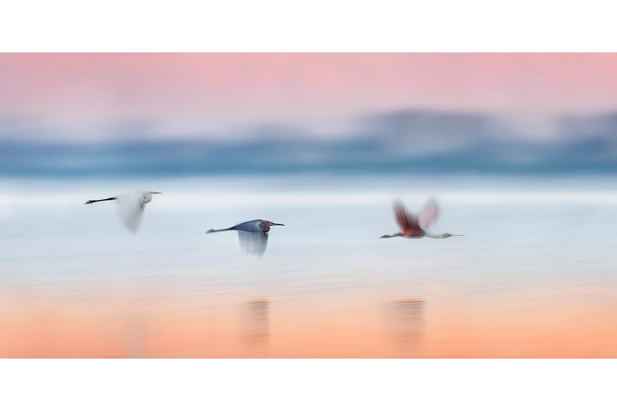 Fine Art Florida Birds_Twilight Blur