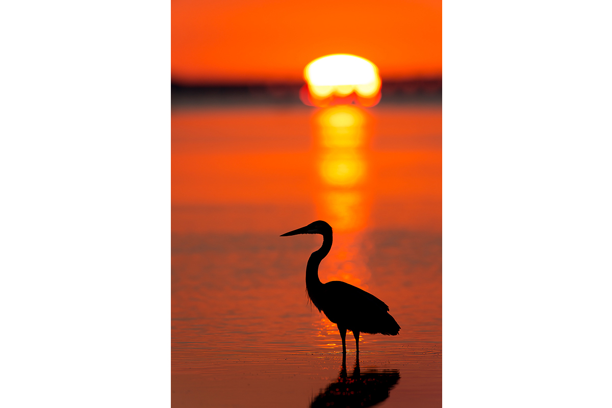 Fine Art Florida Birds_First Lights