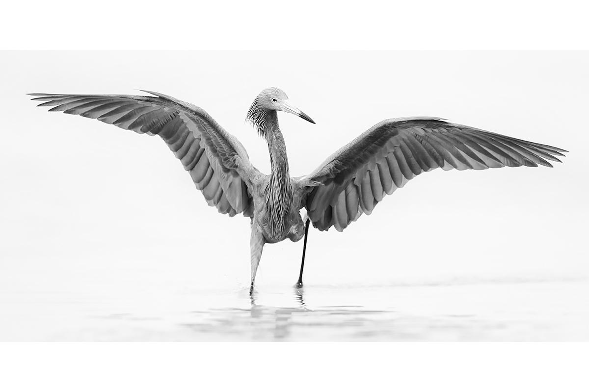 Black and White_Fine Art_Hunting Angel