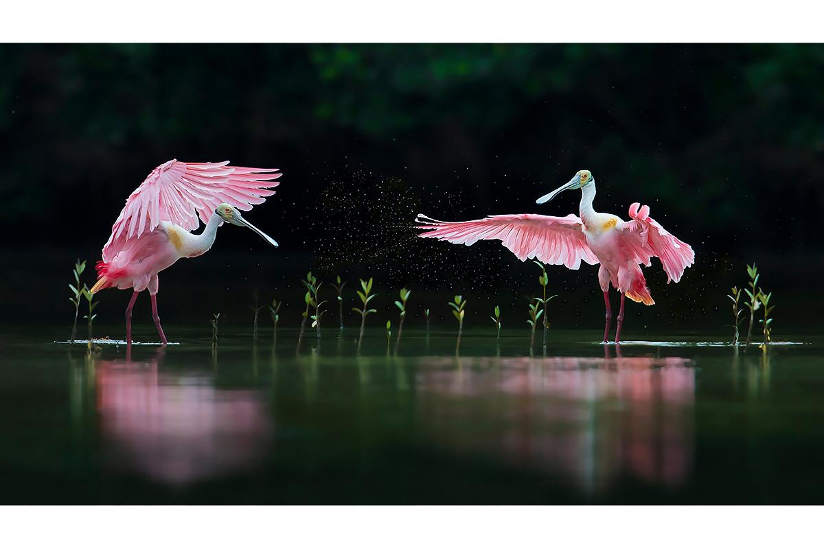Pink Symphony
