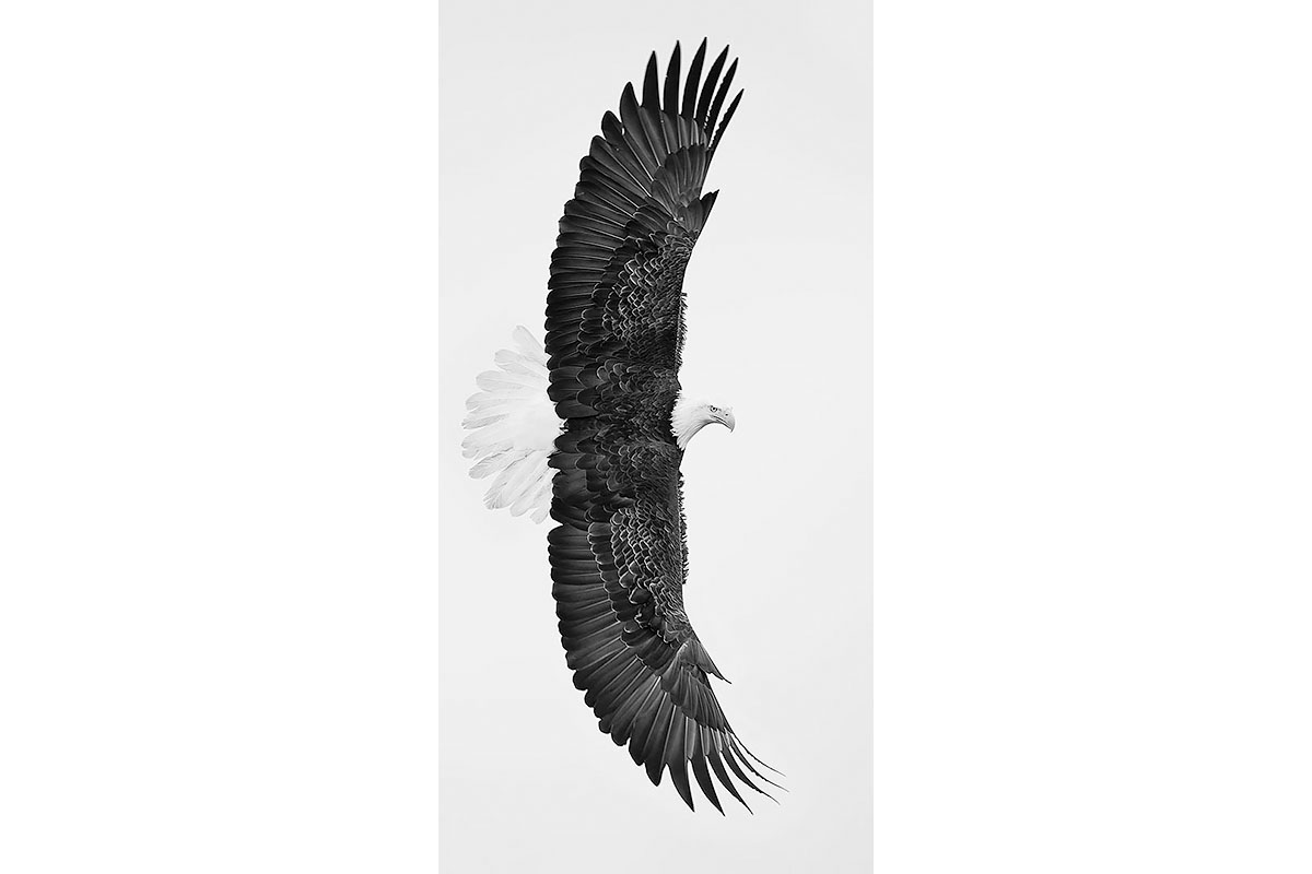 Black and White_Fine Art_Wing Span
