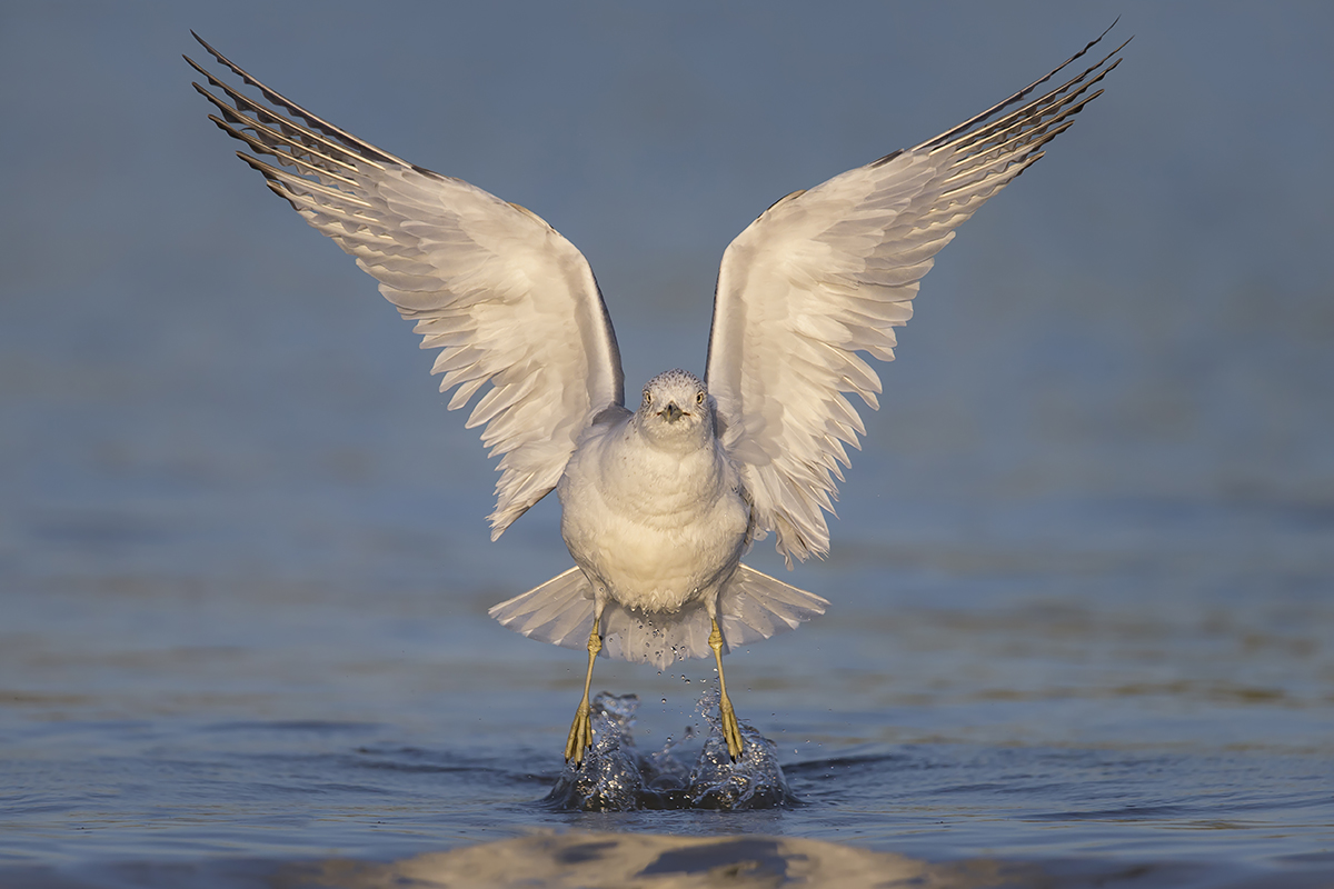 Fine Art Florida Birds_Water Propelled