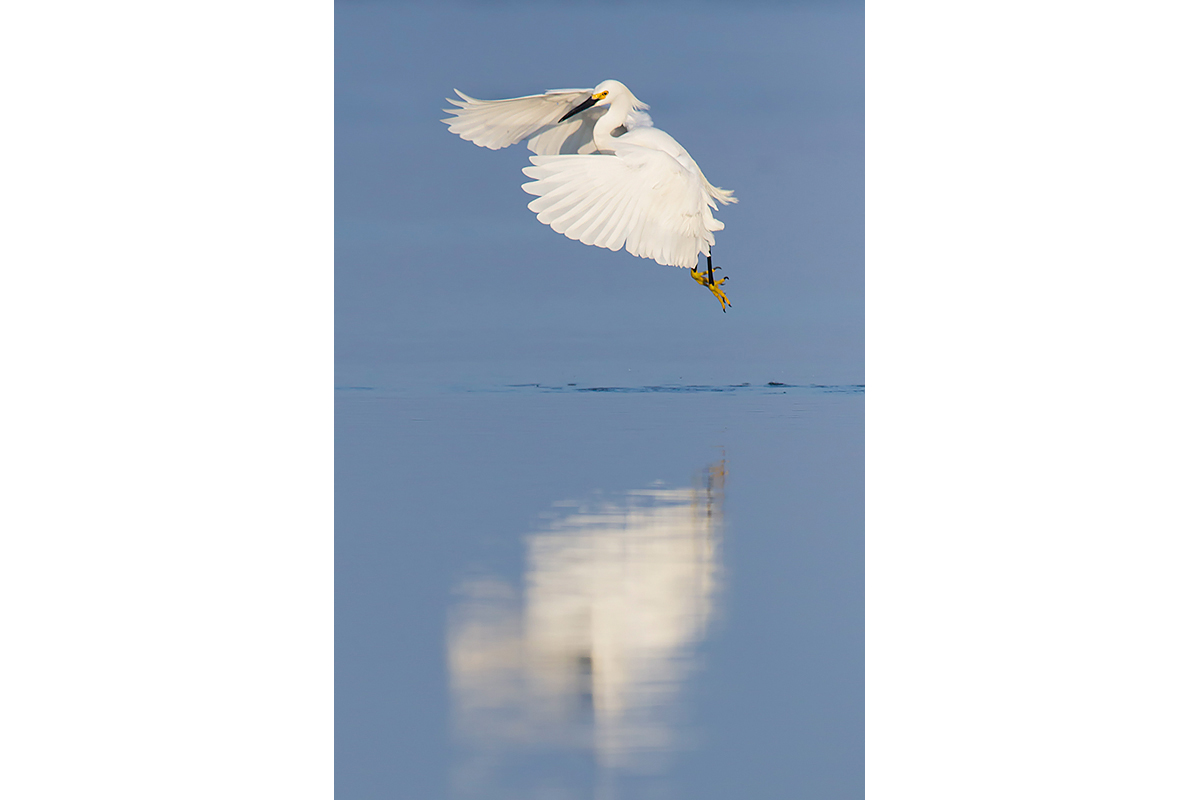 Fine Art Florida Birds_Flapping Reflection