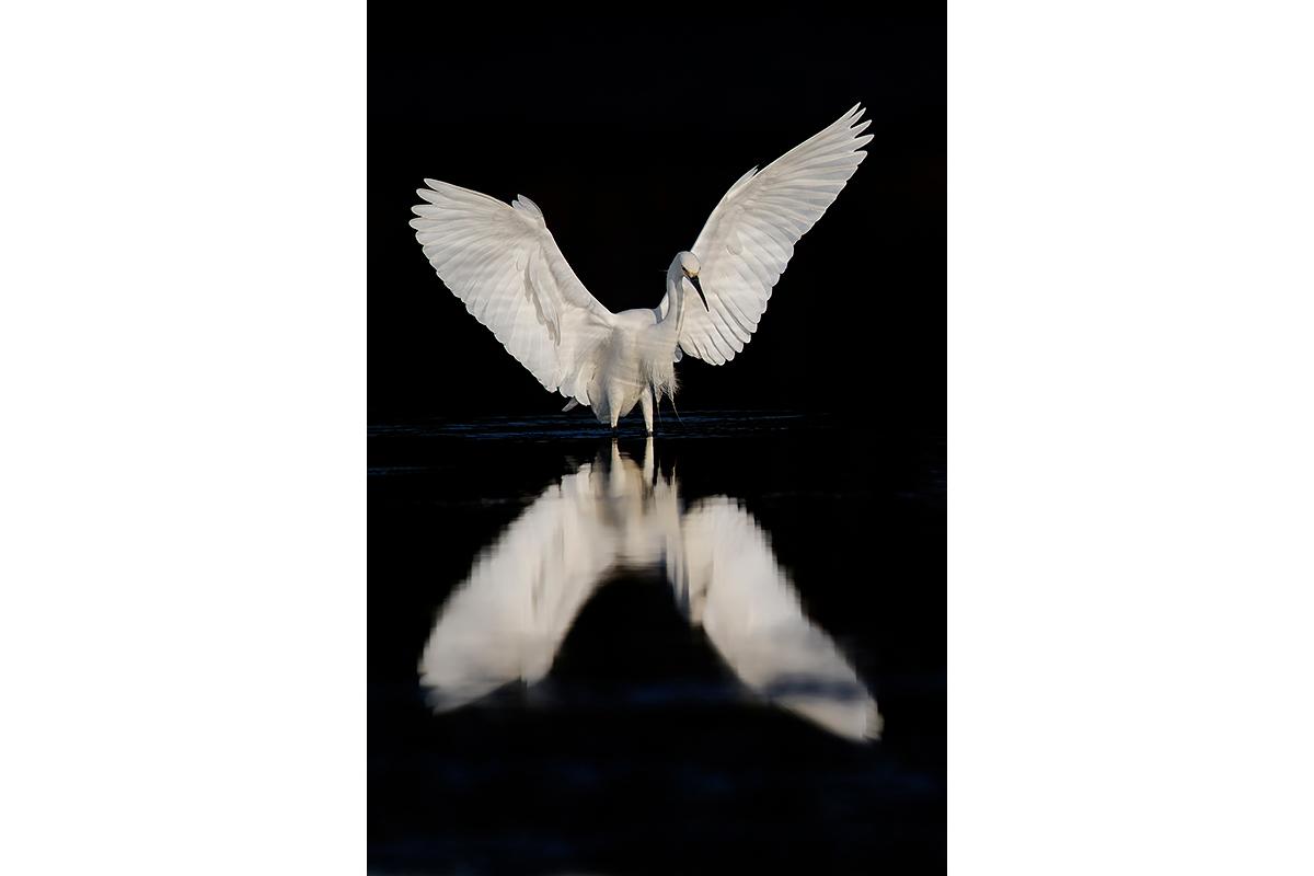 Fine Art Florida Birds_Angel In The Dark