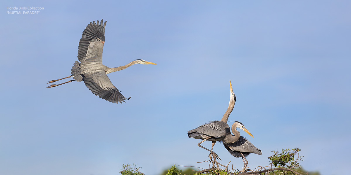 Fine Art Bird Photography