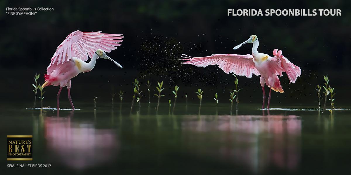 Florida Spoonbills Photography Tours_Pink Symphony