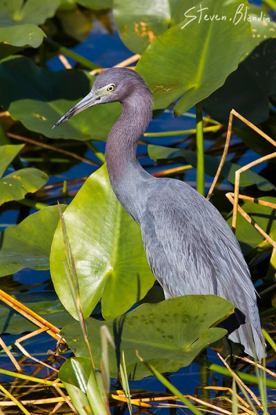 Canon EF 300mm f/4 IS USM_Bird Photography2