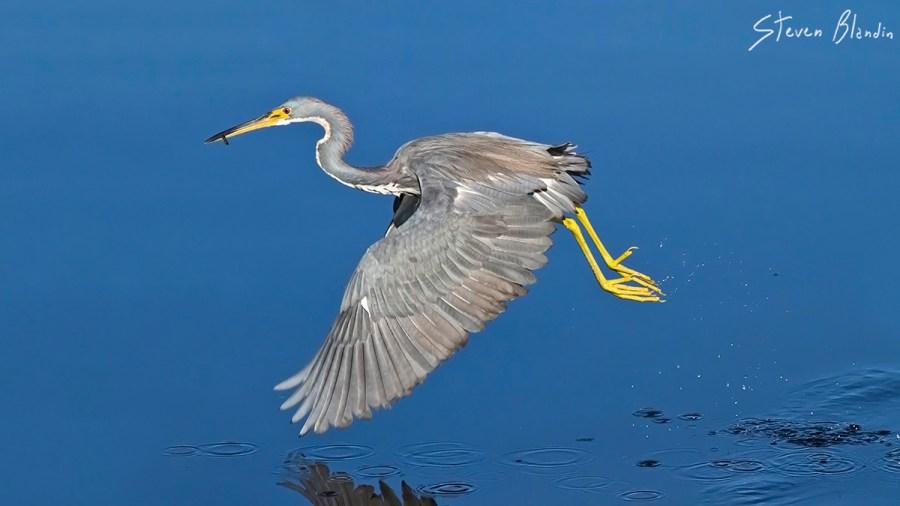Canon EF 300mm f/4 IS USM_Bird Photography1