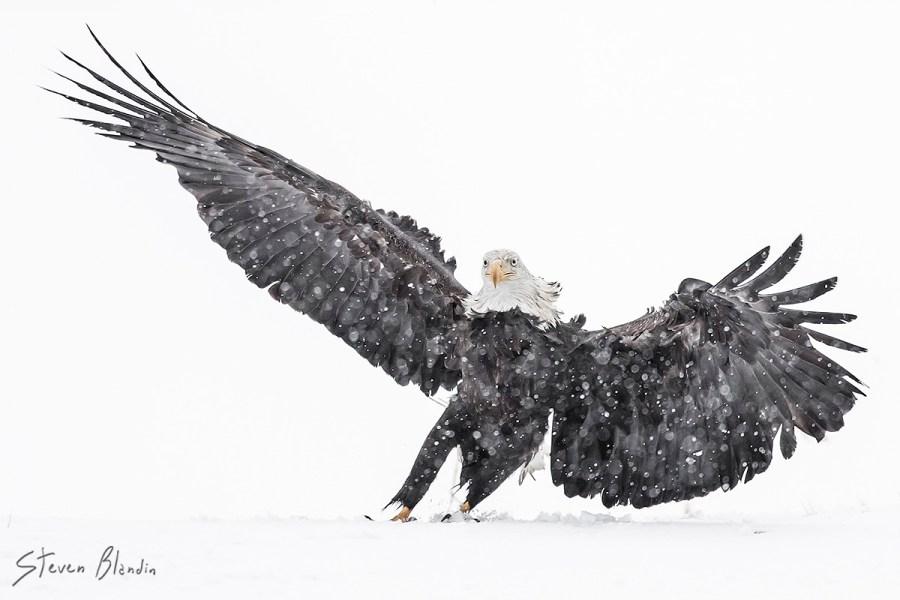 Canon EF 300mm f2-8 IS II USM_Bird Photography3