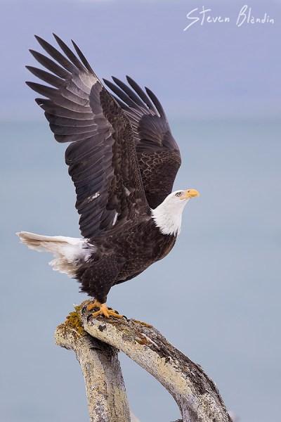 Canon EF 300mm f2-8 IS II USM_Bird Photography2