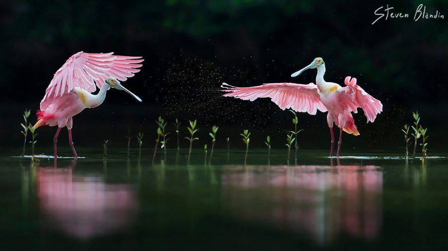 Canon EF 600mm L IS II USM_Bird Photography3