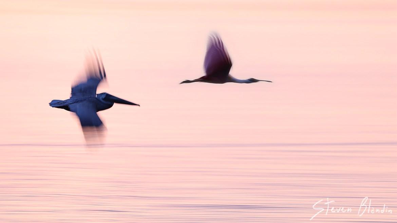 Spoonbill pleasing blur - bird photography tour